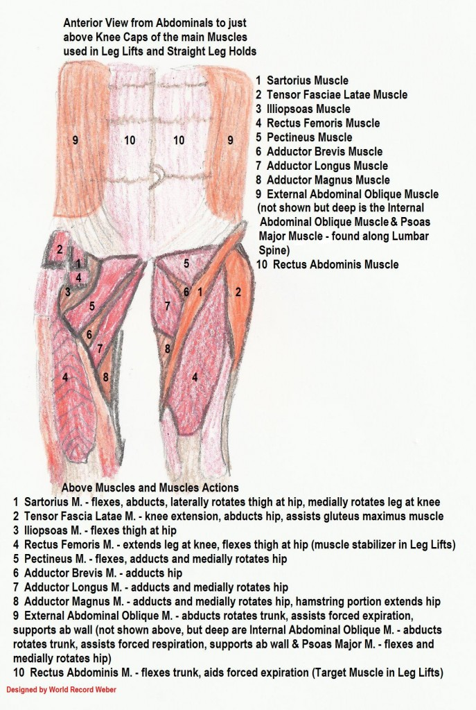 Muscles for Leg Lifts!